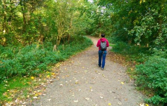 Wandelen bos - Bosjes van Poot - Happy Hikers