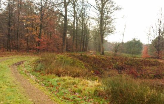 Heide in Apeldoorn