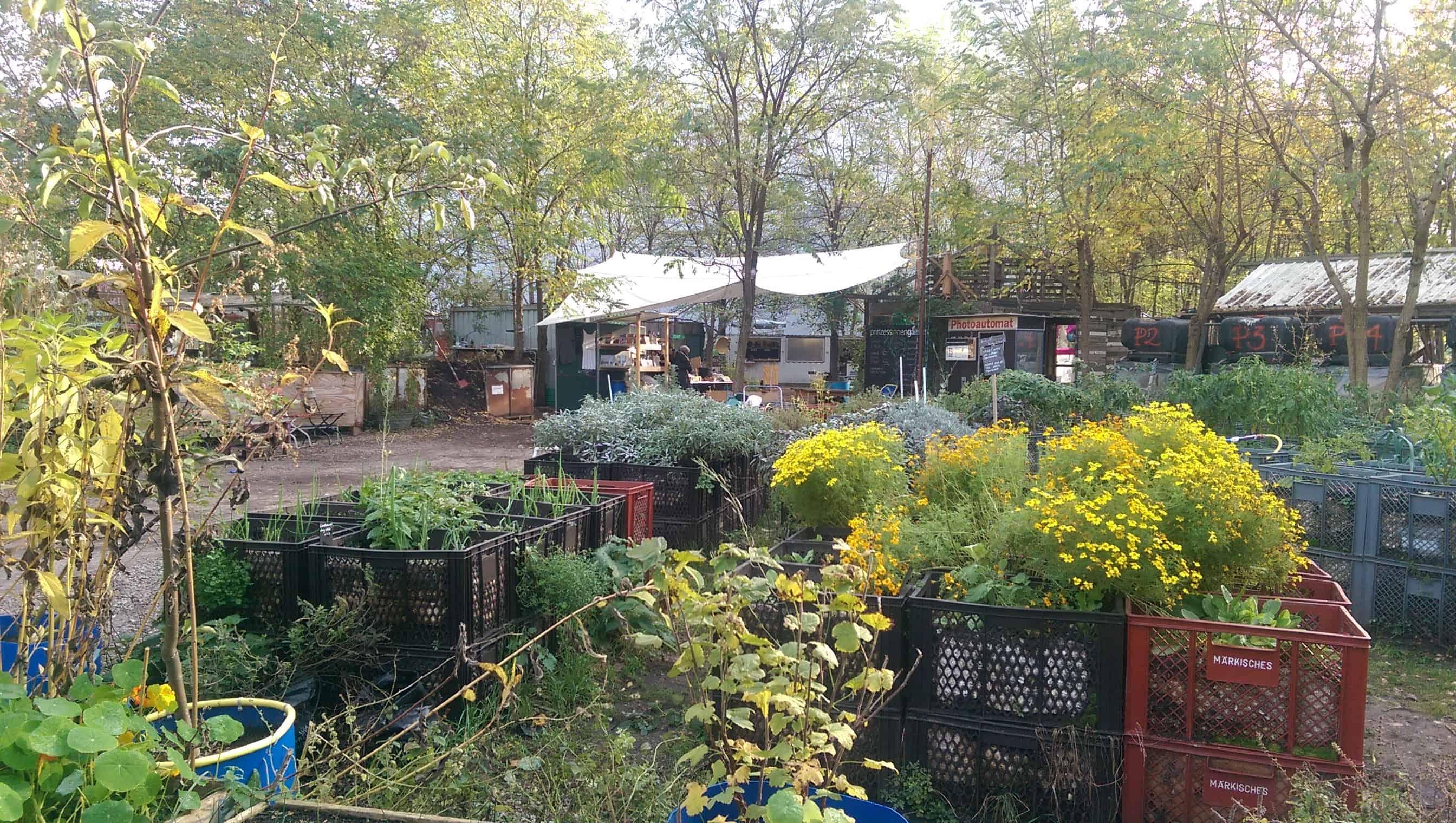 De moestuin van de Prinzessinnengarten