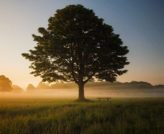 Mindfulness en wandelen - HappyHikers