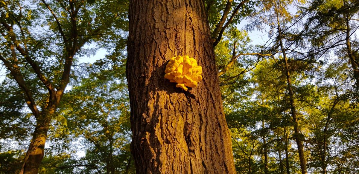 Mooie paddenstoel in ochtendlicht - Trekvogelpad - HappyHikers