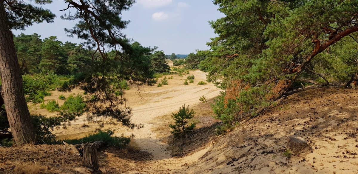 Zandvlaktes op de Hoge Veluwe - Trekvogelpad - HappyHikers