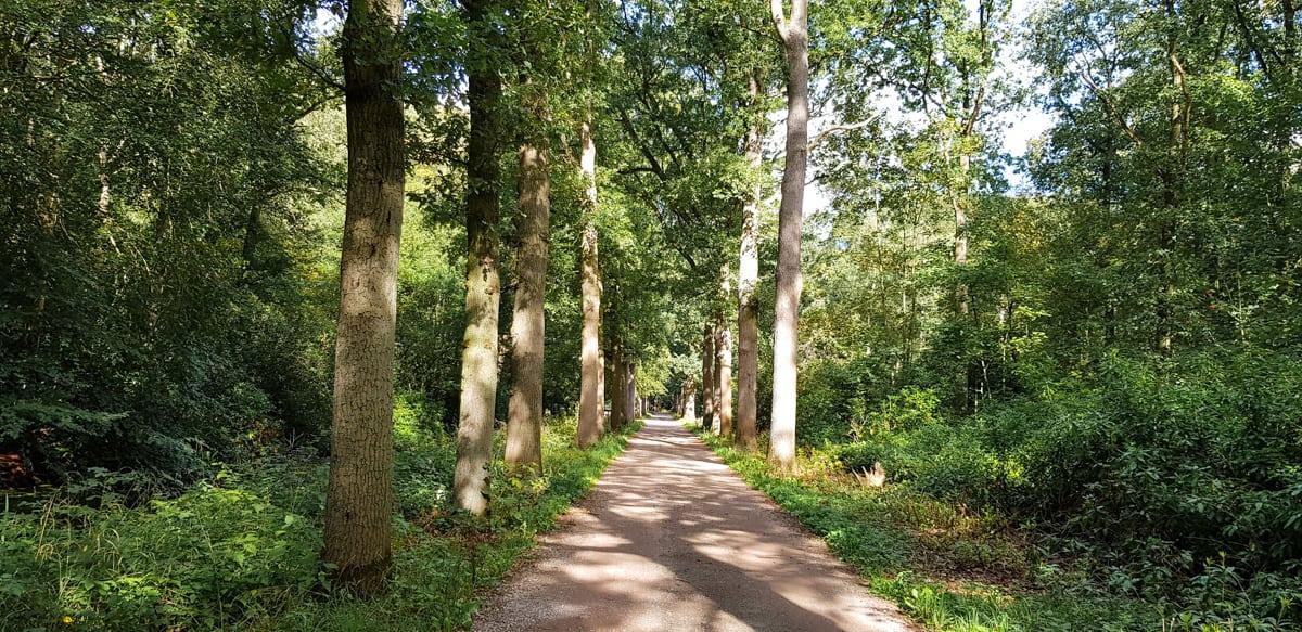 Mooi wandelpad - de Horsten - HappyHikers