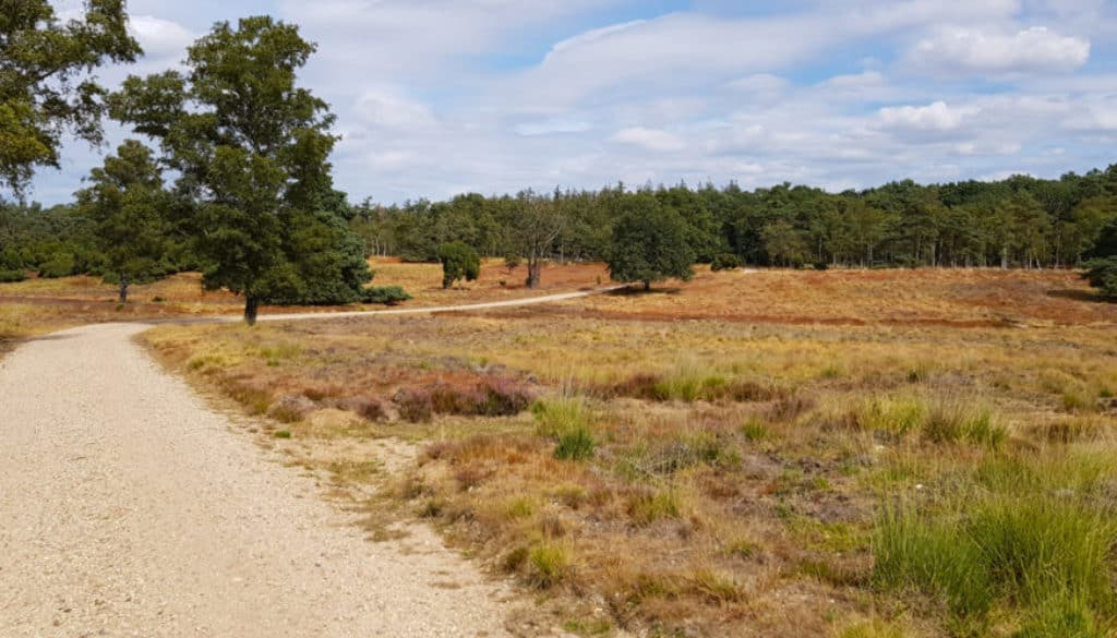 Lopen over de heide - de Loenermark - HappyHikers