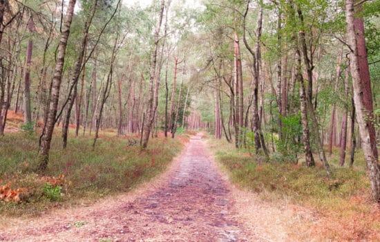 Bos bij de Veluwezoom - wandeling Laag-Soeren - HappyHikers