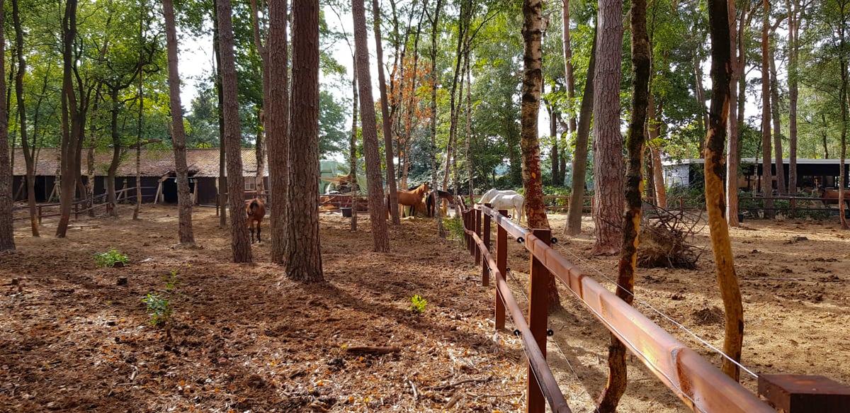 Paarden in het bos - Wandeling Laag-Soeren - HappyHikers
