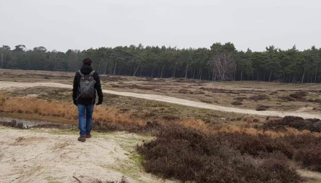 NS wandeling - Utrechtse Heuvelrug