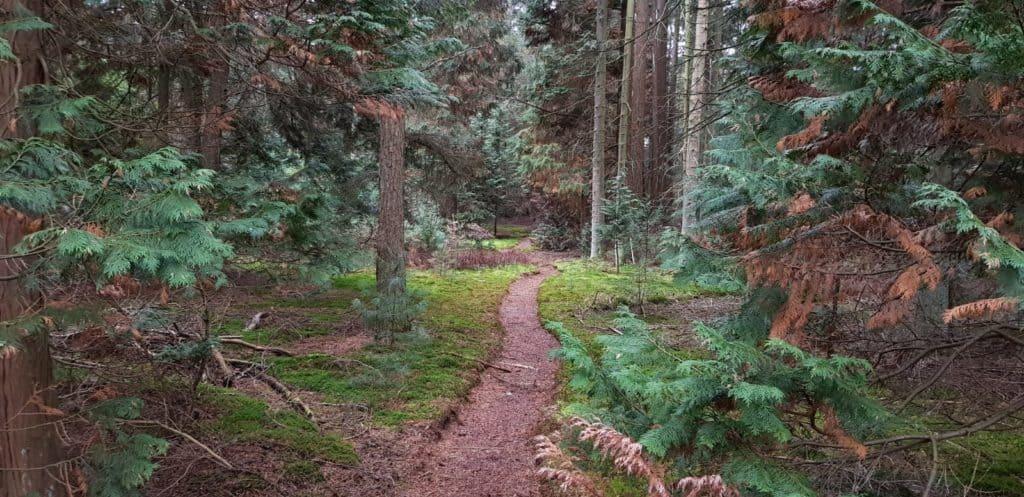 NS wandeling - Utrechtse Heuvelrug - pad het bos in