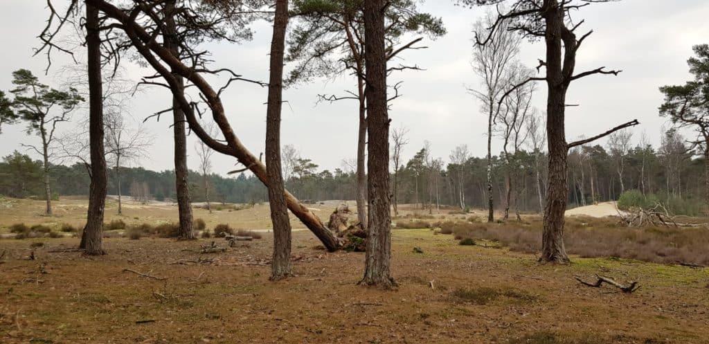 NS wandeling - Utrechtse Heuvelrug - Uitzocht over de vlakte