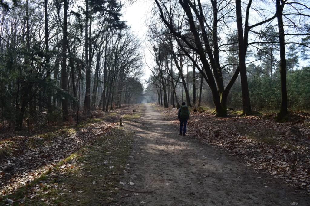 Eelco door het bos - Van Amerongen naar Rhenen - Trekvogelpad - HappyHikers