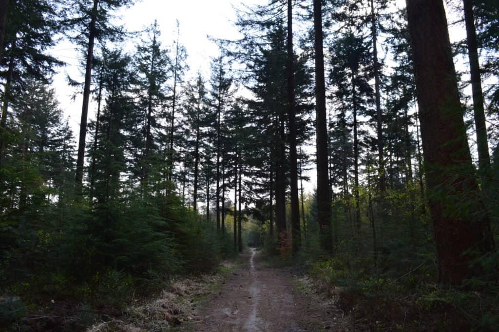HappyHikers - een zijn met het bos