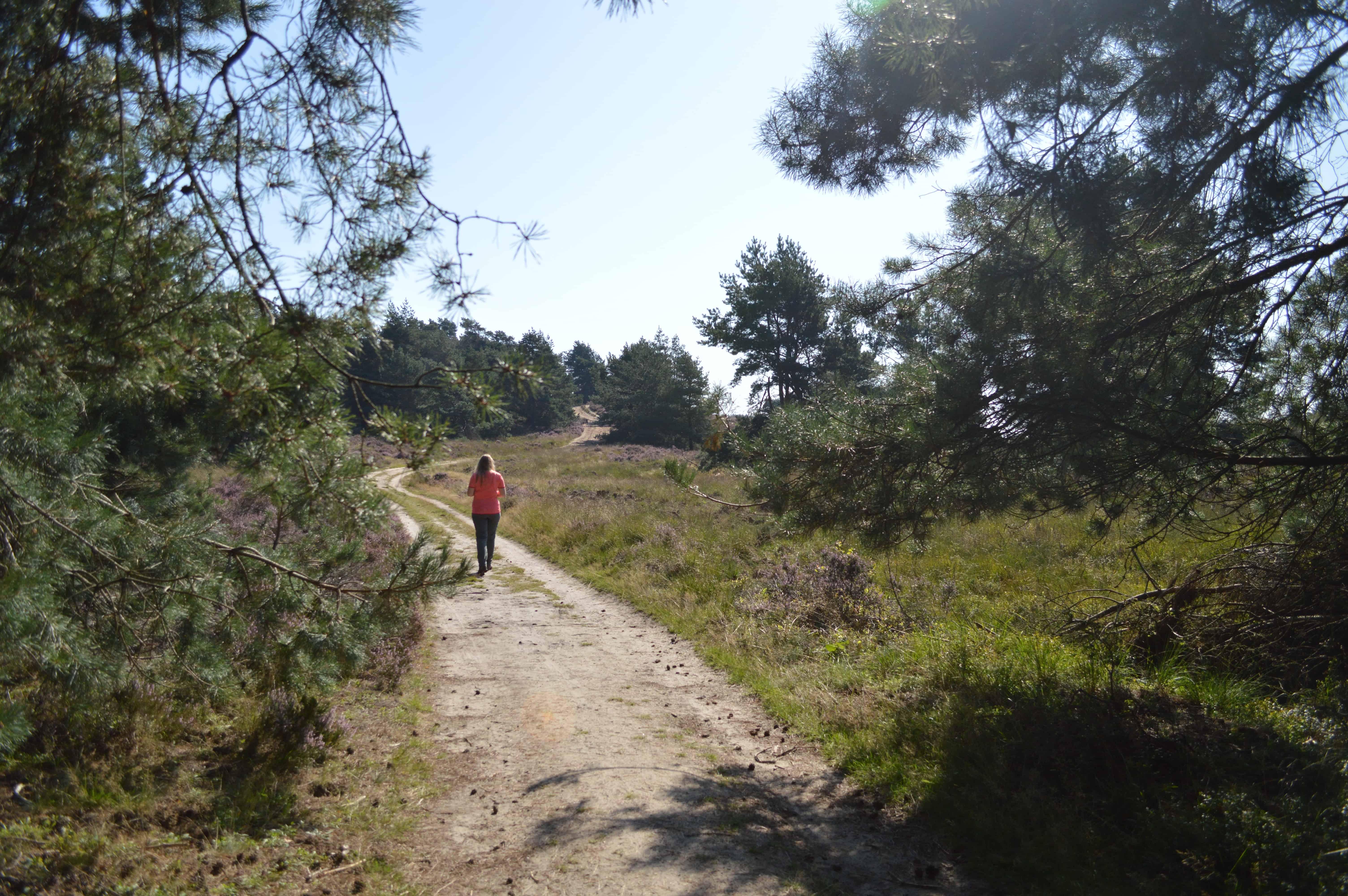 Fijn wandelen langs mooie heide - HappyHikers