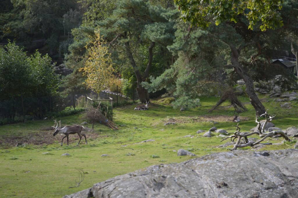 Rendierien in het stadspark - Stadwandeling Göteborg - HappyHikers