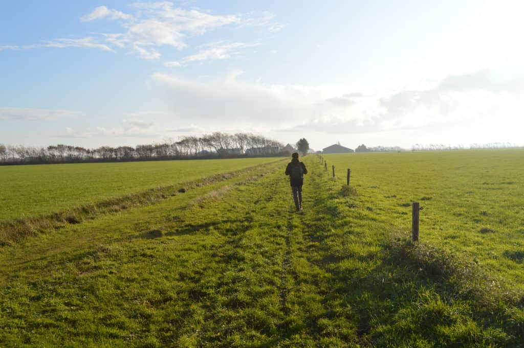 Langs-het-weiland-Ameland-Roosduinen-en-Landweerdijk-HappyHikers