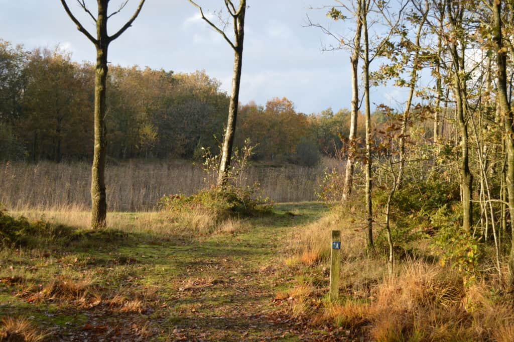Meer-met-riet-Ameland-Roosduinen-en-Landweerdijk-HappyHikers