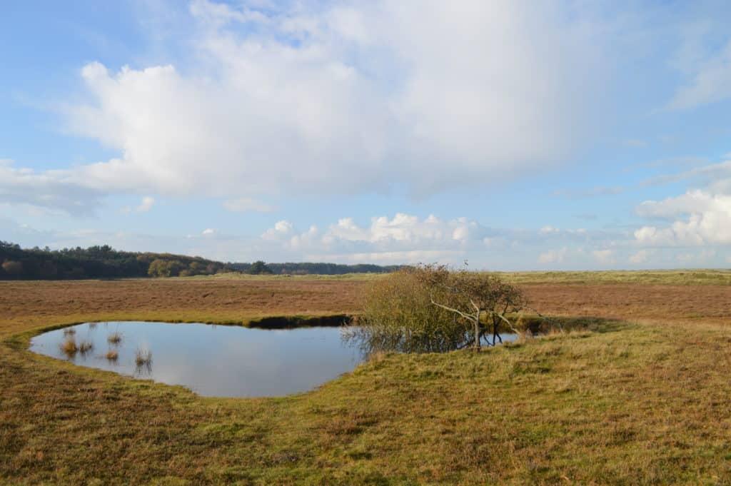 Prachtig-duingebied-Ameland-Roosduinen-en-Landweerdijk-HappyHikers