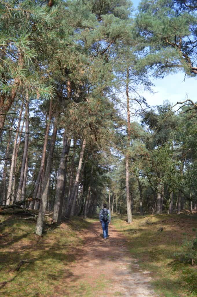 Bomen - Deelerwoud - HappyHikers