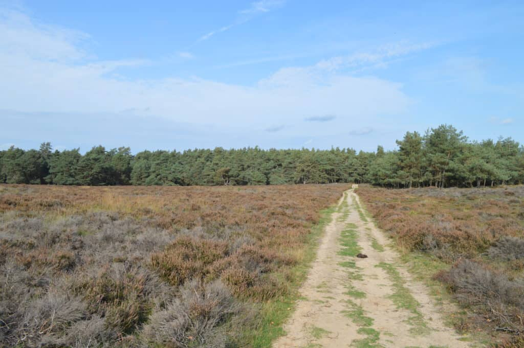 Pad over de grote heide - Deelerwoud - HappyHikers