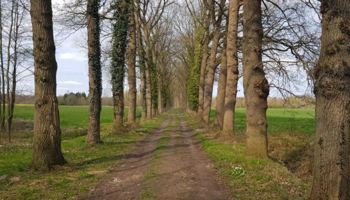 HappyHikers.nl - Hanzestedenpad etappe 1 - Doesburg naar Brummen - Boomrijke laan