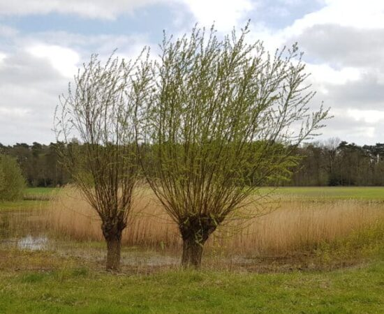 IVN Landgoed Woudhuizen - HappyHikers