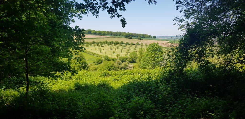 Uitzicht vanuit het Vijlnerbosch - HappyHikers.nl