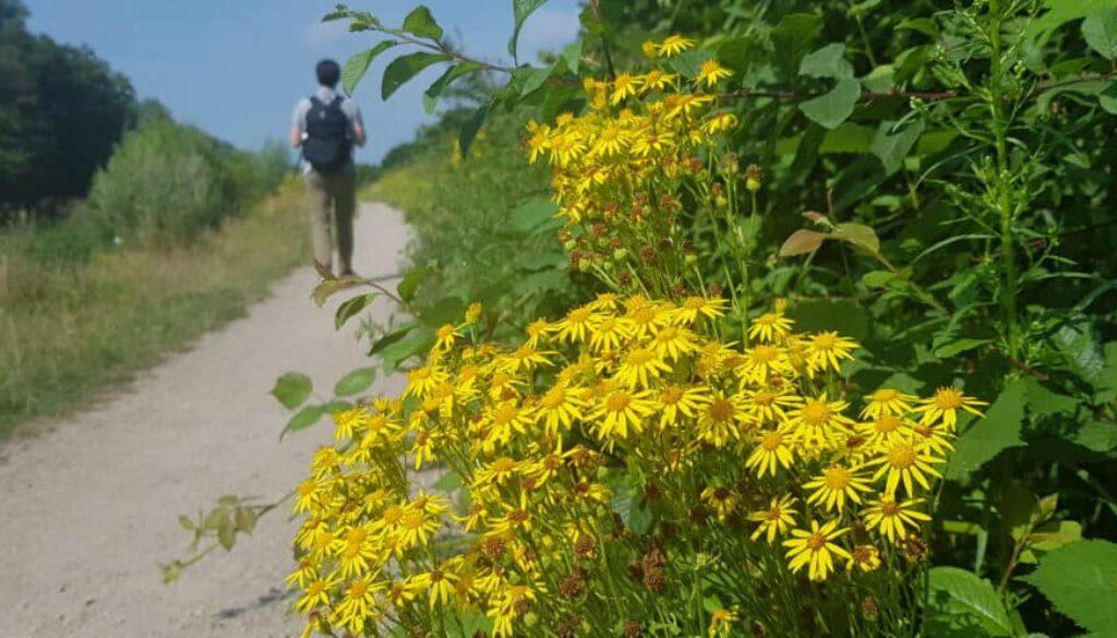 Wandelen wilde bloemen - Stoetwegenpad - HappyHikers